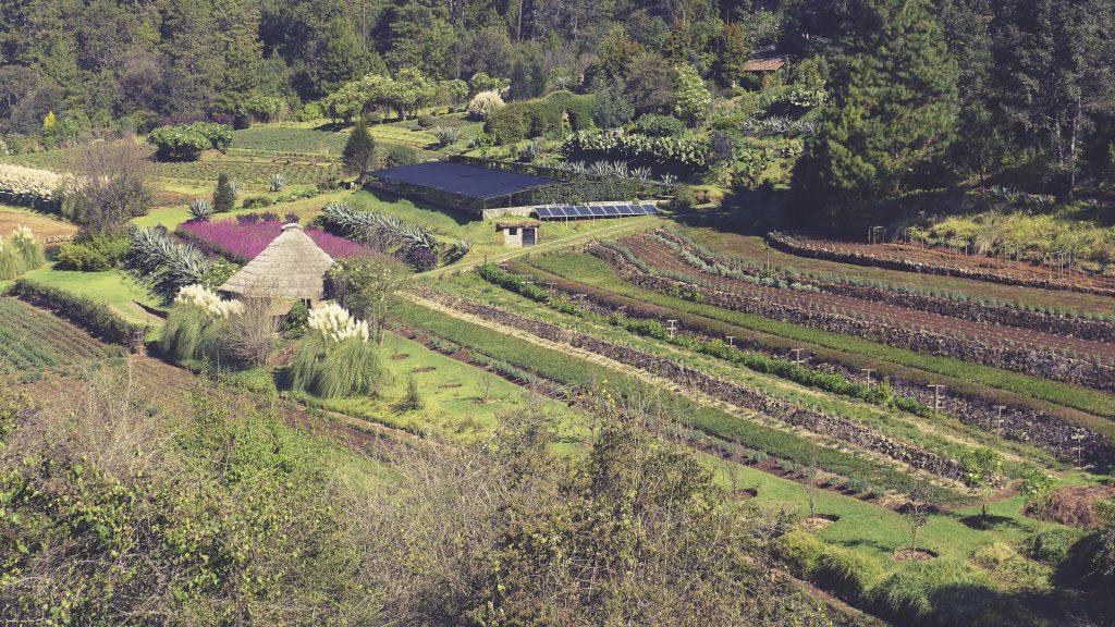 Sanandi Farm
