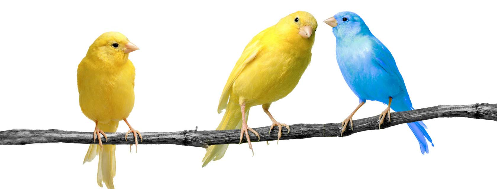 Public Relations Orange County - Birds Tweeting